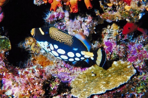 Tubbataha Reefs Natural Park, Palawan, Filipijnen.