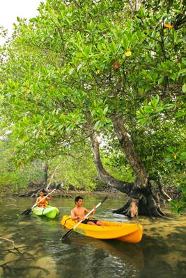 Kajakken in de mangroven van Dos Palmas Island in de Honda Bay - Puerto Princesa, Palawan, Filipijnen
