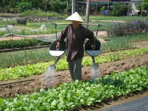 Werkzaamheden in een groentetuin in Tra Que - Hoi An, Midden Vietnam